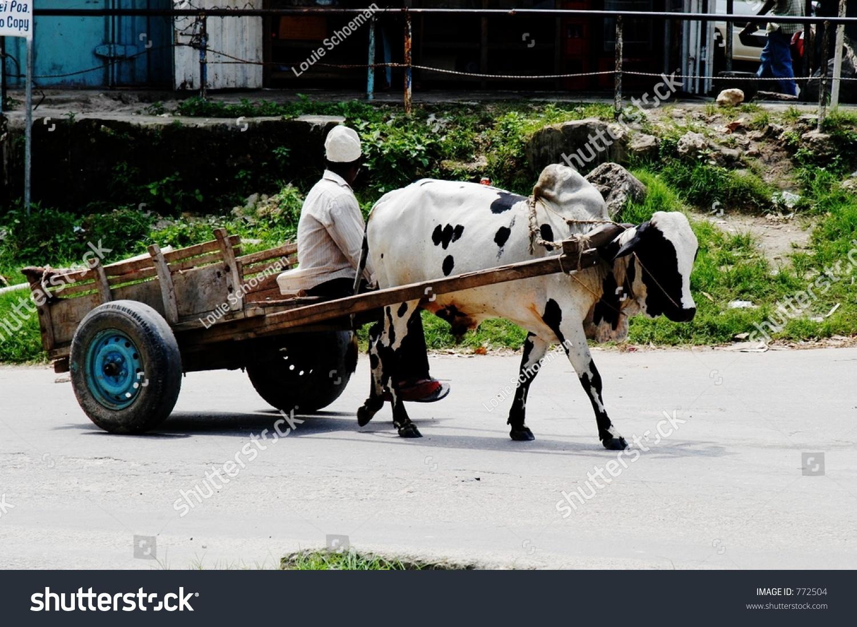 Cow Pulling Wagon : Cow pulling wagon on pemba island zanzibar archipelago