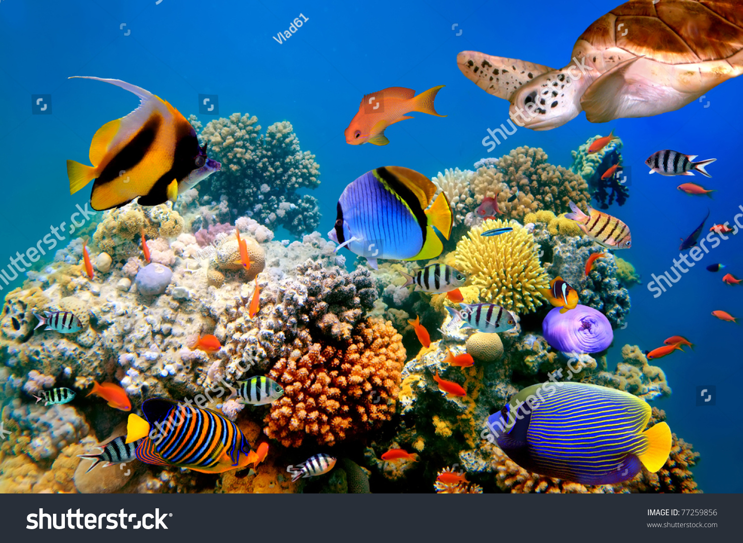 Photo Of A Tropical Fish And Turtle On A Coral Reef - 77259856 ...