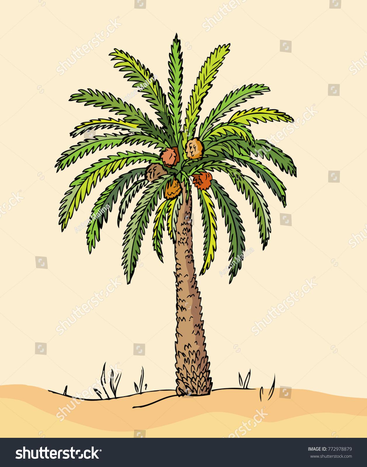 Desert date fruit palm on sand stock vector 772978879 shutterstock desert date fruit palm on sand dunes vector hand drawn palm tree sketch biocorpaavc