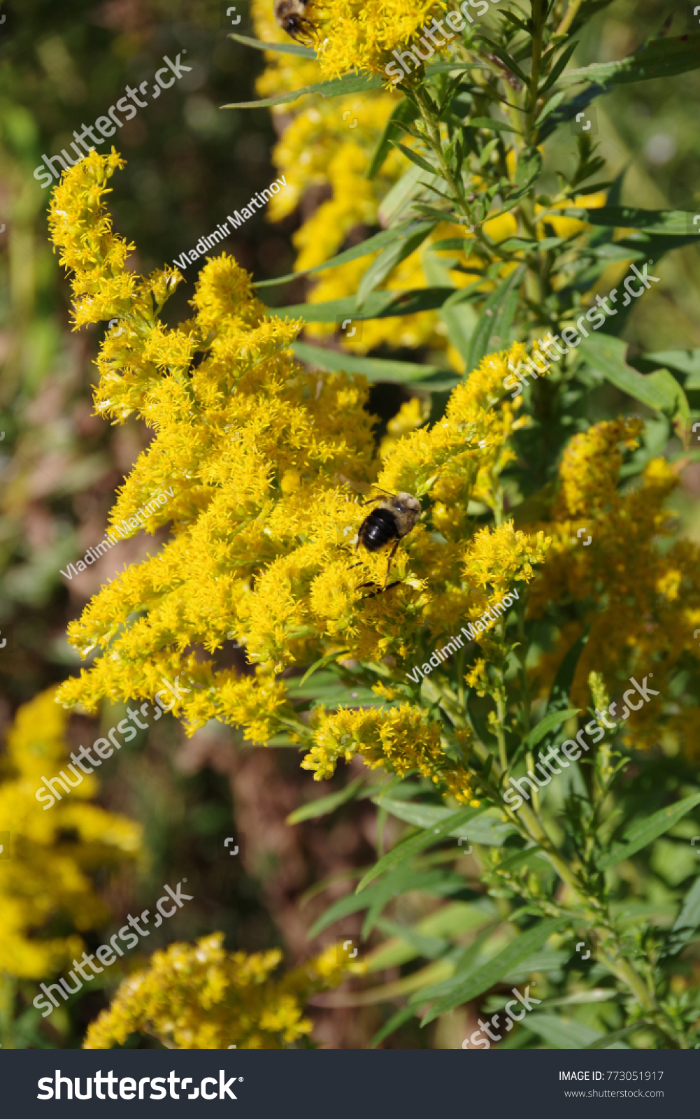 Yellow Flower Forest Weed Pollinated By Stock Photo Edit Now