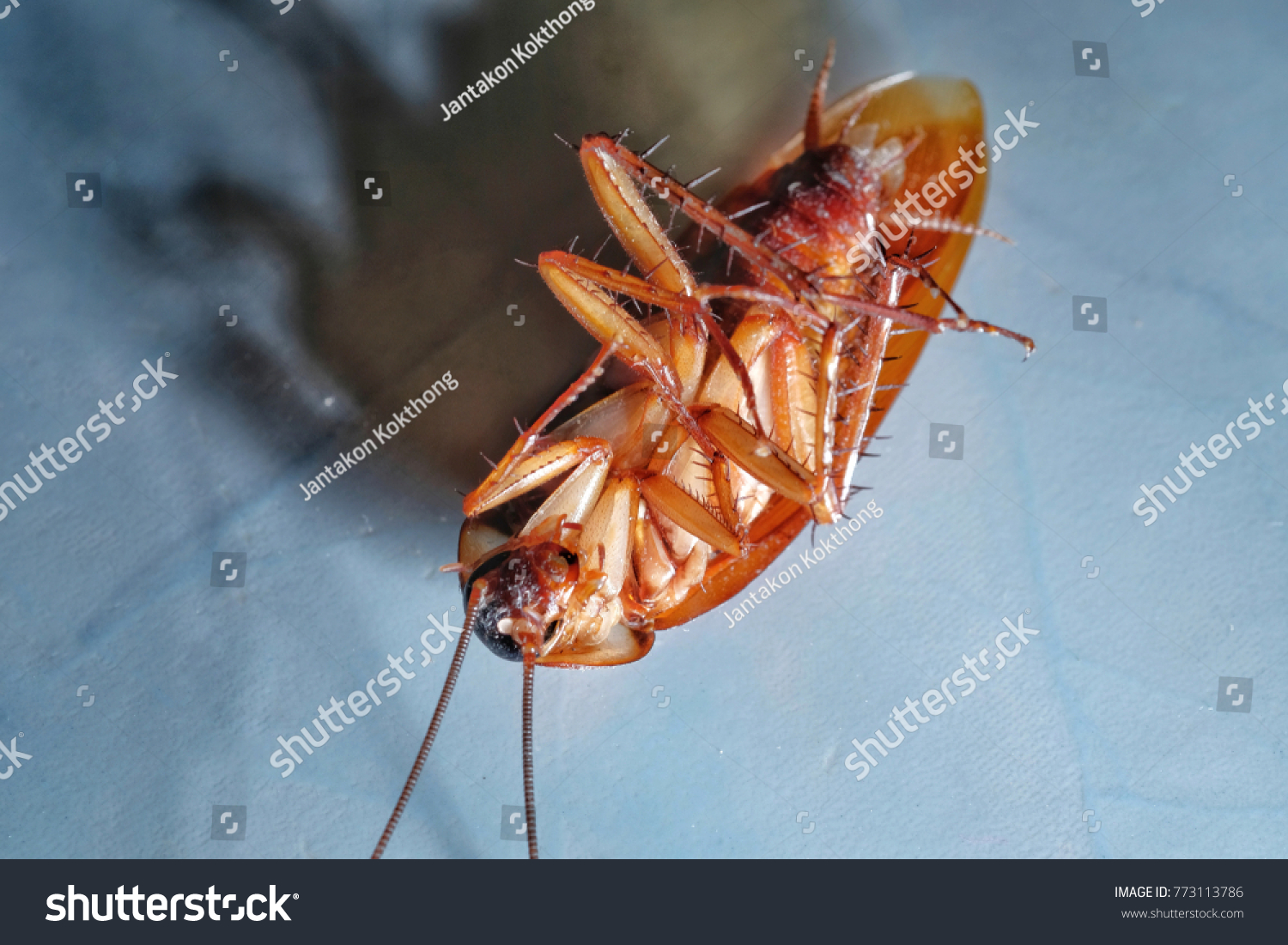 Dead Cockroaches Apartment Kitchen Inside Highrise Stock Photo (Edit ...