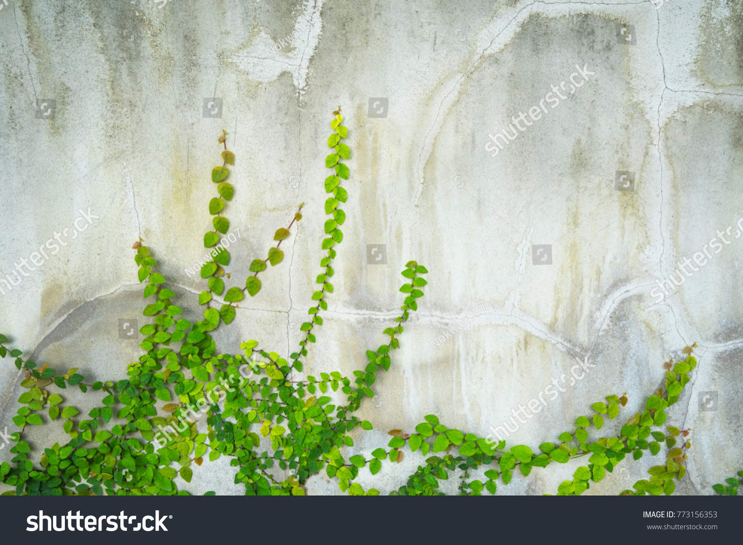 Green Vine Climbing Creeping On Raw Stock Photo 773156353 - Shutterstock