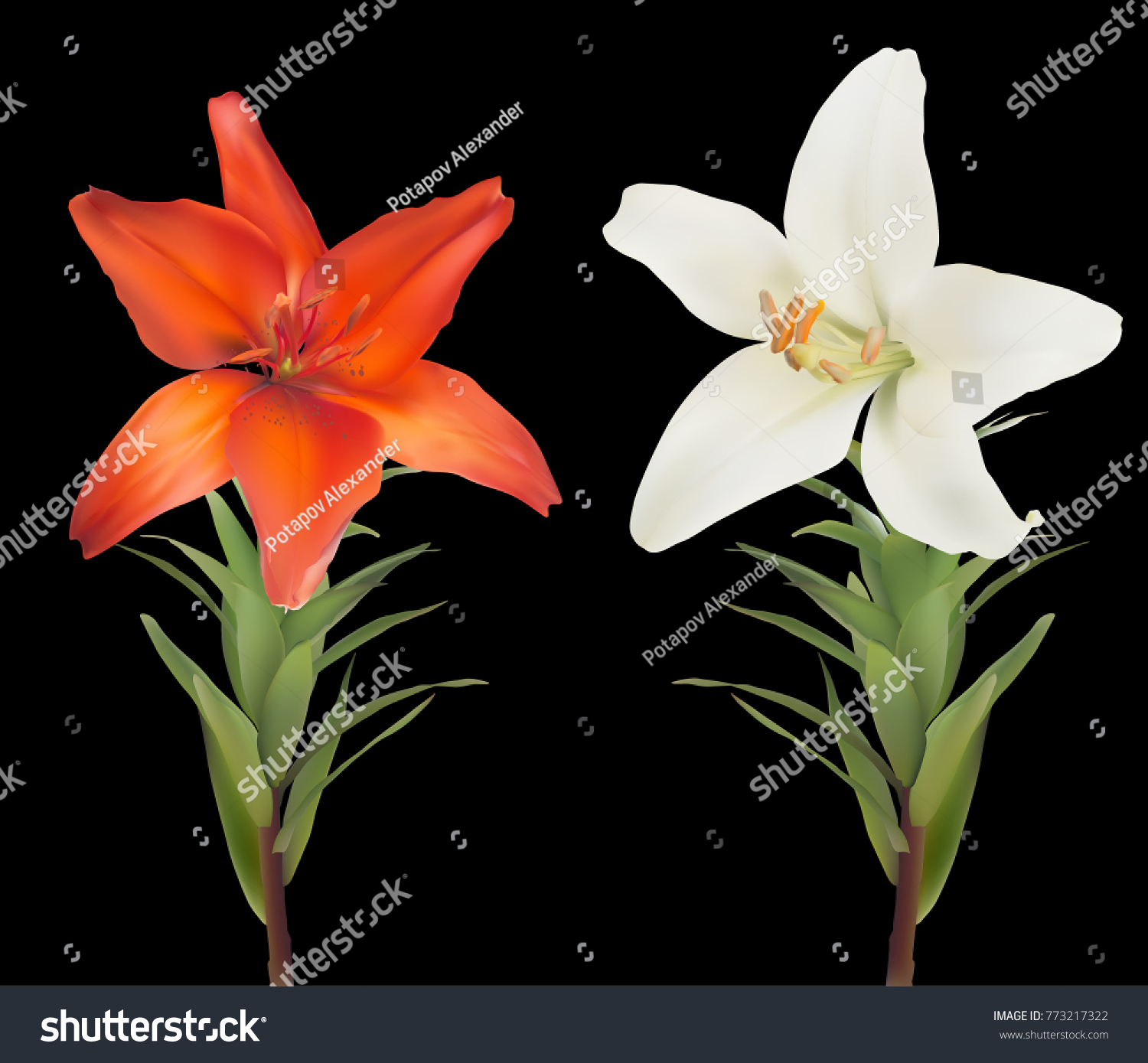Illustration Lily Flowers Isolated On Black Stock Vector Royalty