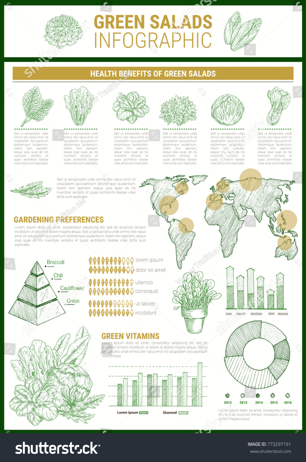 Salad Greens Infographic Template Leaf Vegetable Stock Vector