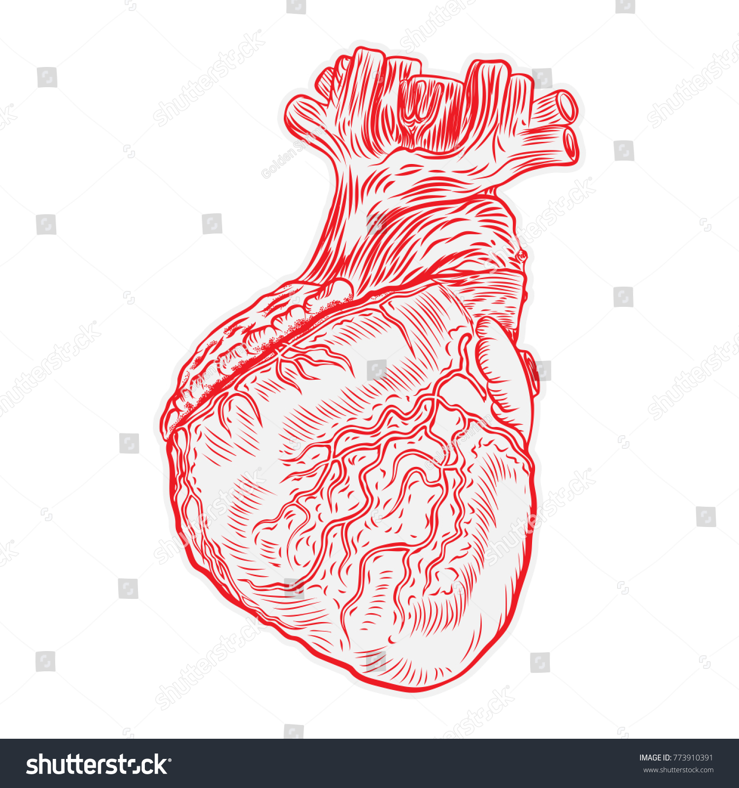 Heart Hand Drawn Isolated On White Stock Vector 773910391 - Shutterstock