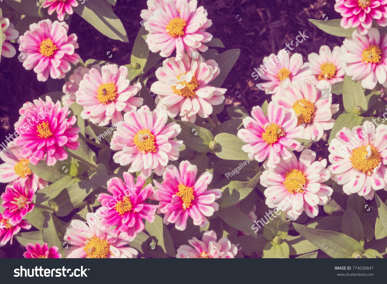 Multi Color Marigold Flowers In The Garden Ez Canvas