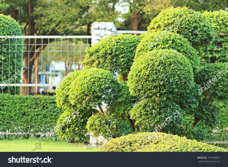 Beautiful Shrubs Garden Pruning Stock Photo Edit Now 774169021