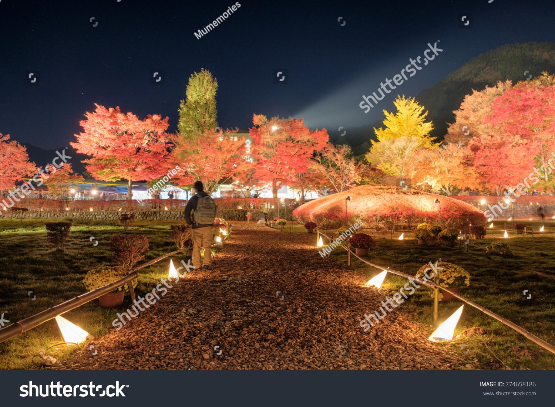 Beautiful Corridor Illuminated Maple Garden Traditional Stock Photo ...