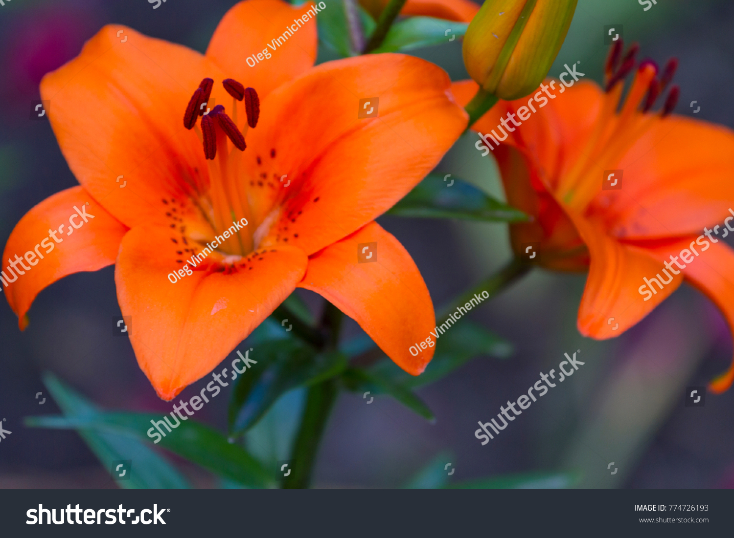 Background Bright Colors Bright Flowers Flowers Stock Photo Royalty