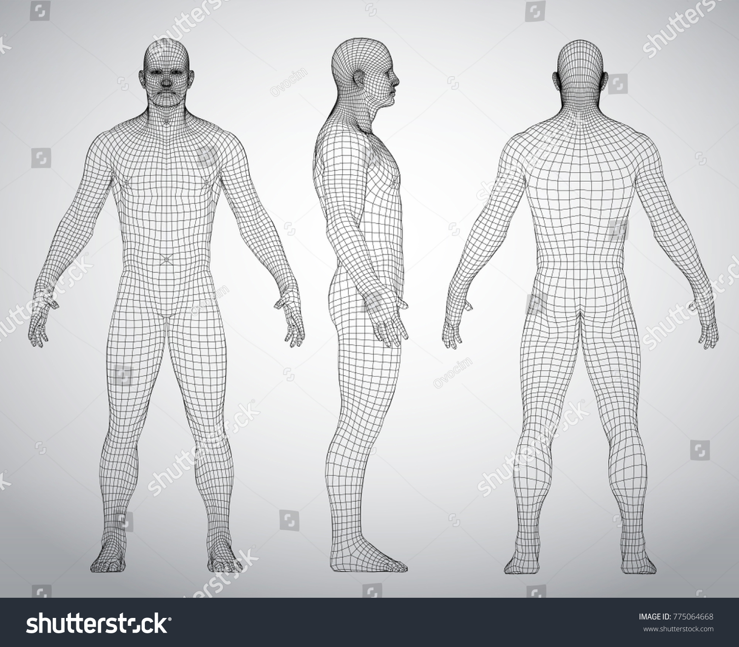 Wire Frame Human Full Body Virtual Stock-Vektorgrafik 775064668 ...
