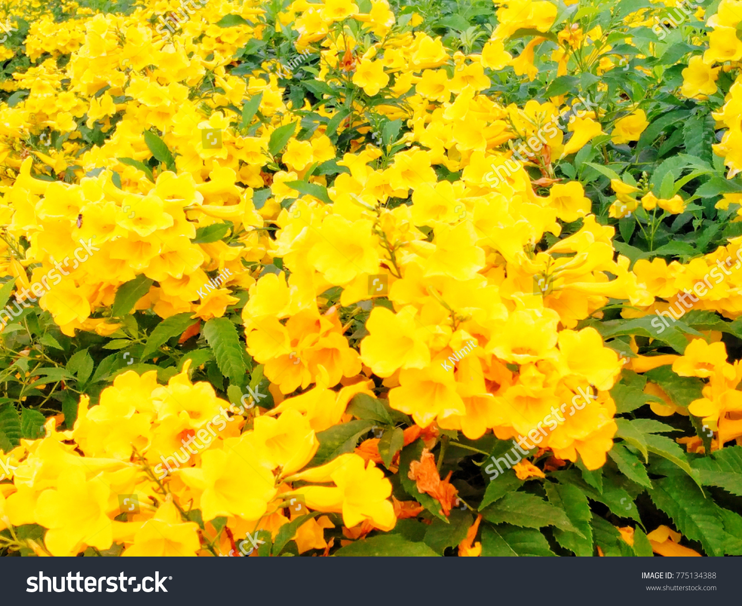 Yellow Flower Blossom Winter This Flower Stock Photo Safe To Use