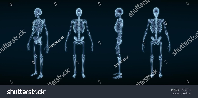Human Skeleton Anatomy Xray 3 D Rendering Stock Illustration ...