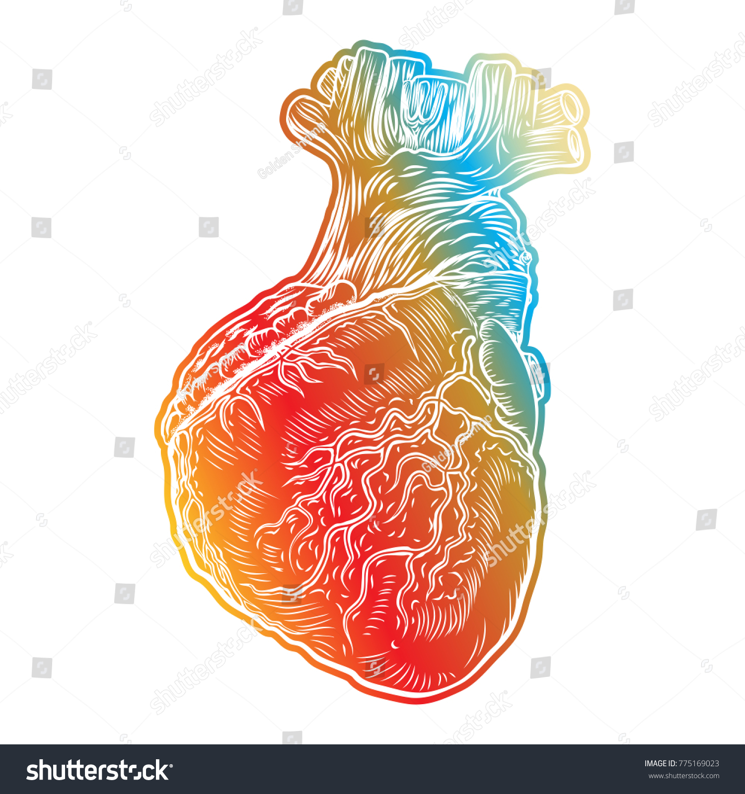 Red Human Heart Aorta Veins Arteries Stock Vector 775169023 ...