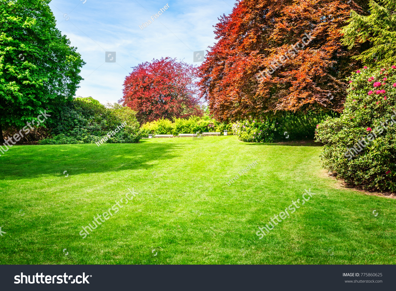 Spring Green Park City Park Blooming Stock Photo (Download Now ...