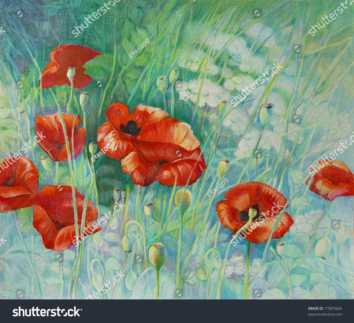 Poppies Color Pencil Drawing Stock Illustration 77607604 - Shutterstock