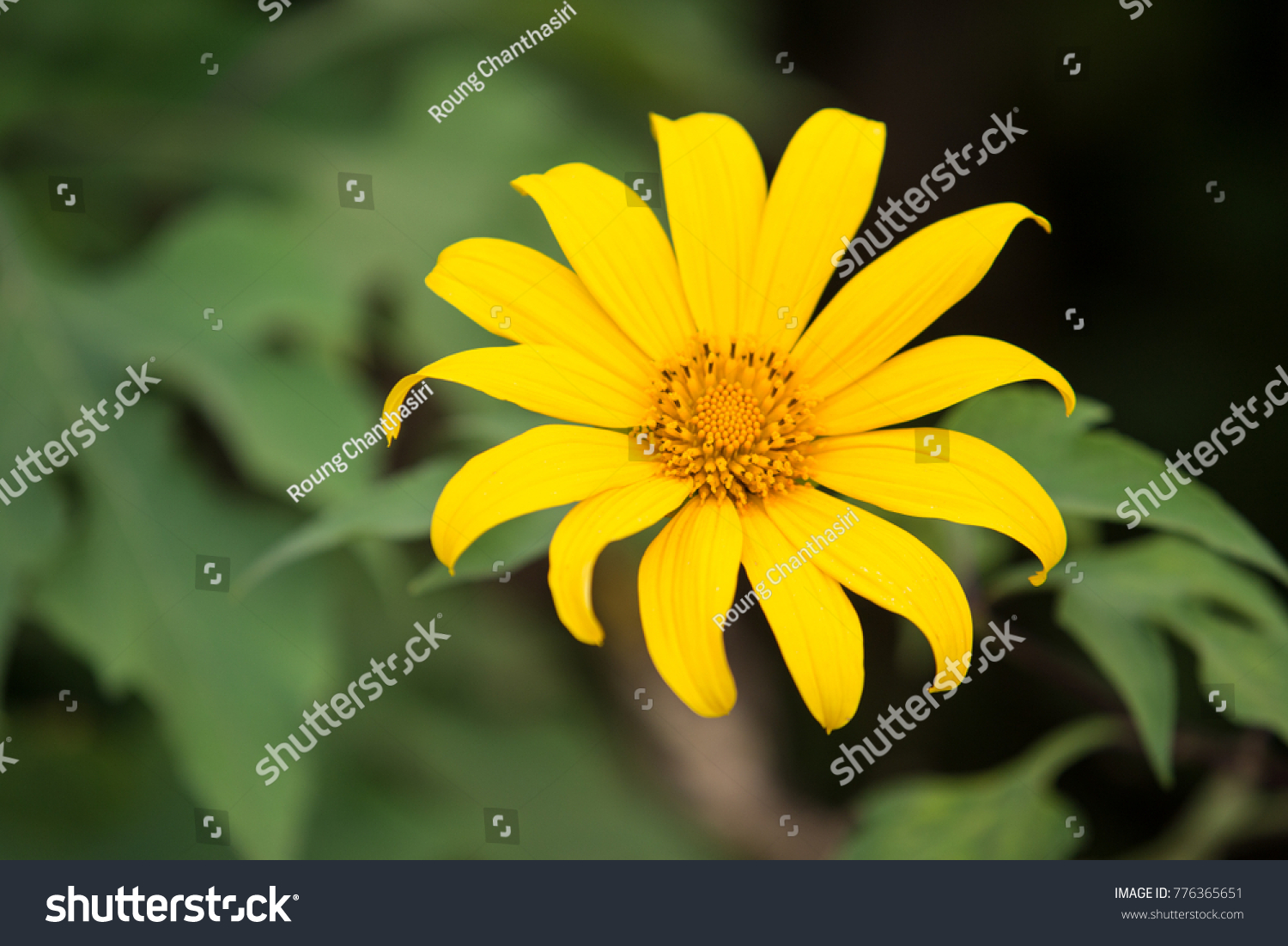 Name Yellow Flower That Blossom Winter Stock Photo Edit Now