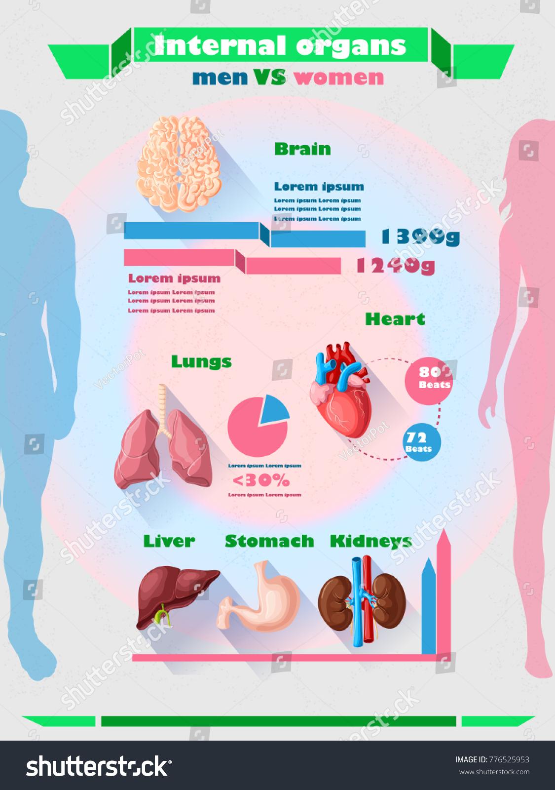 Human Internal Organs Infographic Template Body Stock Vector ...