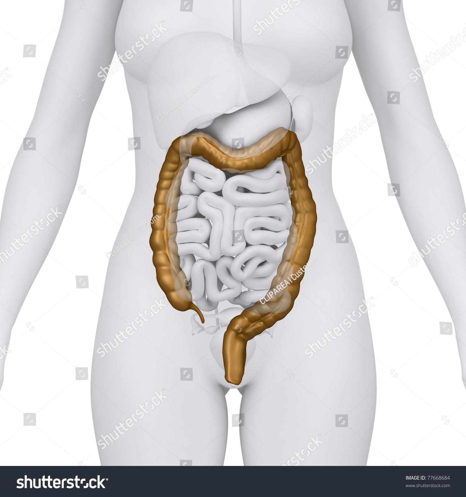 Anatomy pics of abdomen