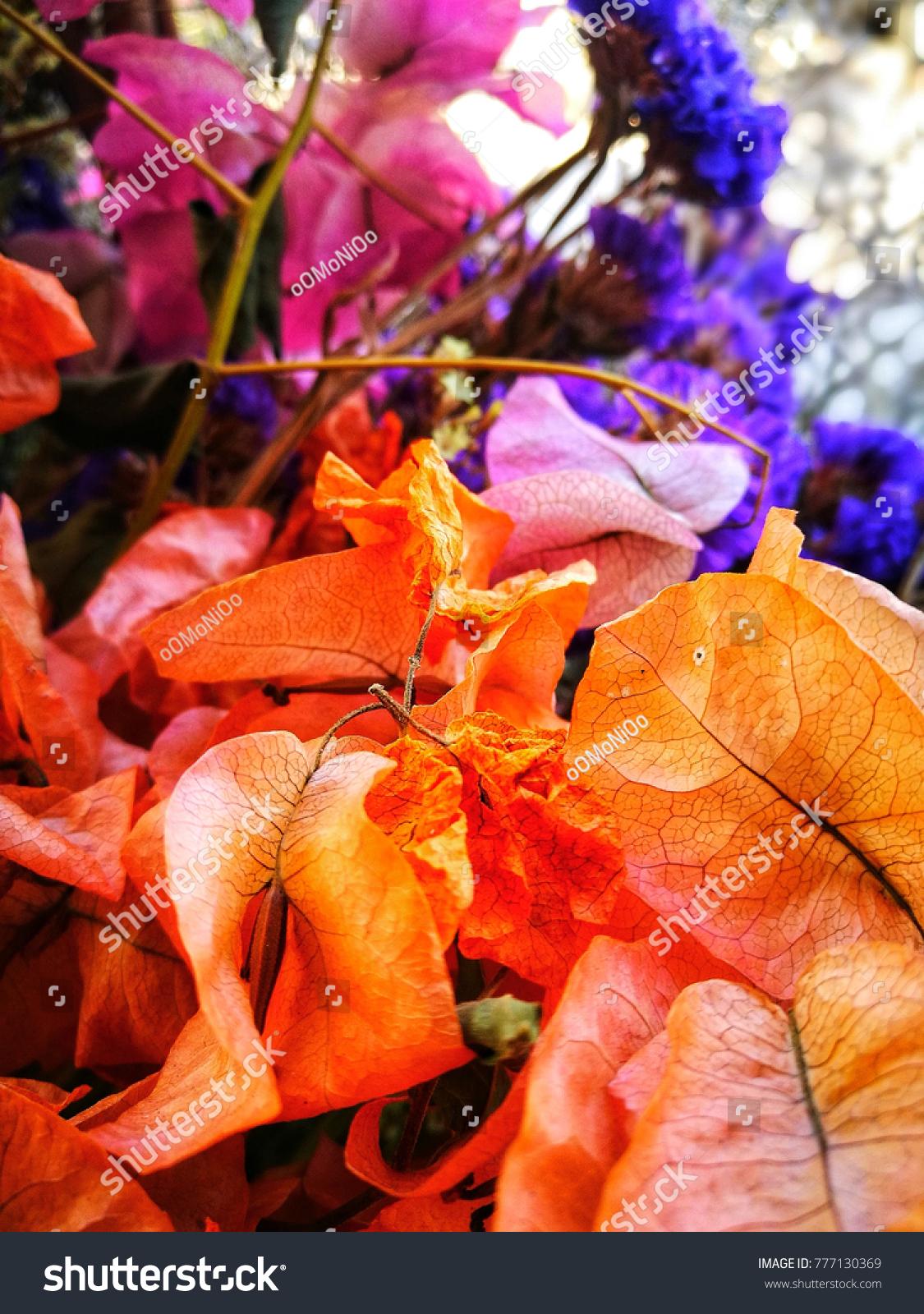 Dried Dark Blue Larkspur Dried Orange Stock Photo (Royalty Free ...