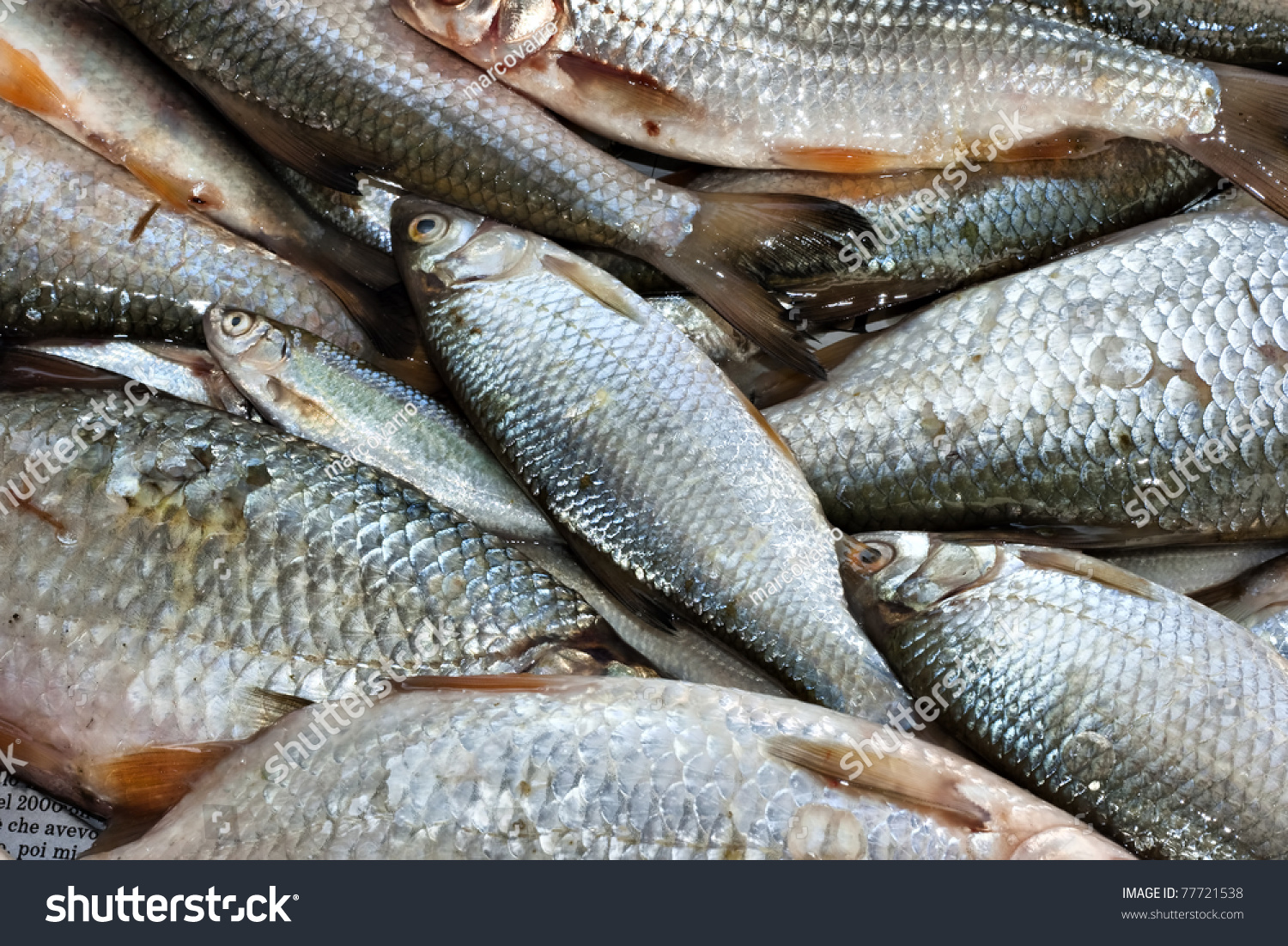 Background full of small edible freshwater fish stock for Edible freshwater fish
