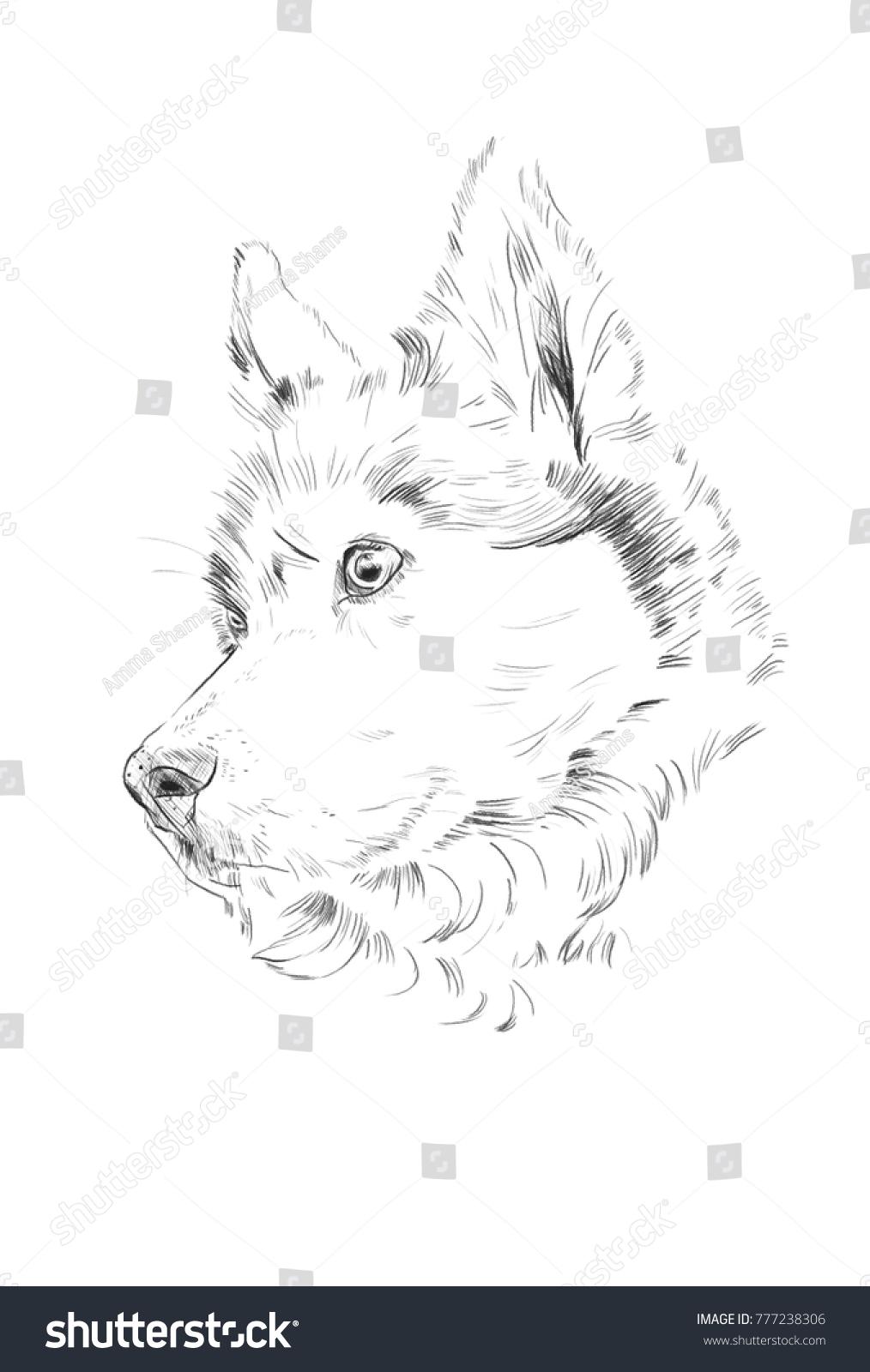 Siberian Husky Dogs Head Pencil Sketch Stock Illustration Royalty