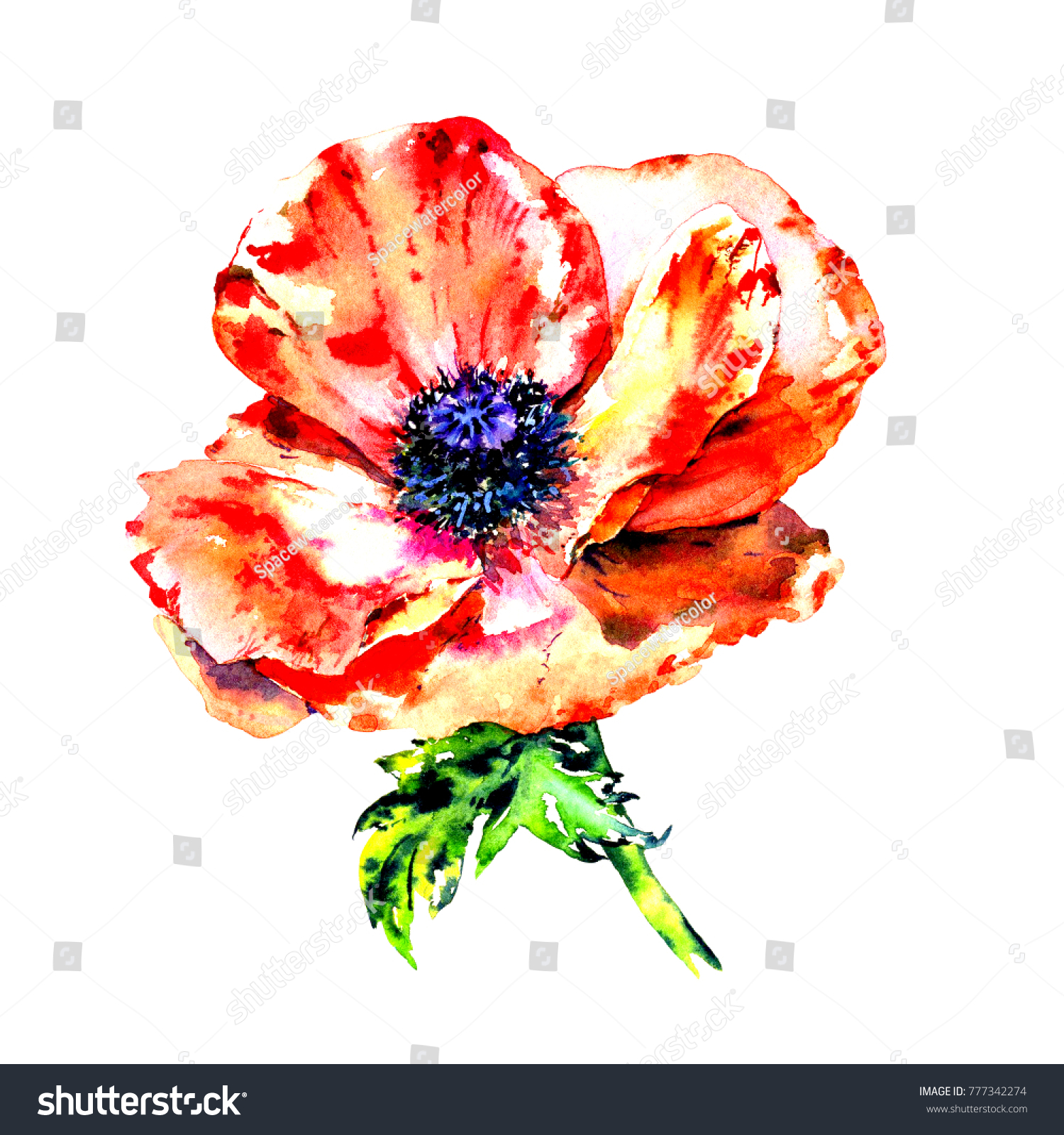 Watercolor Hand Drawn Colorful Wild Poppies Stock Illustration