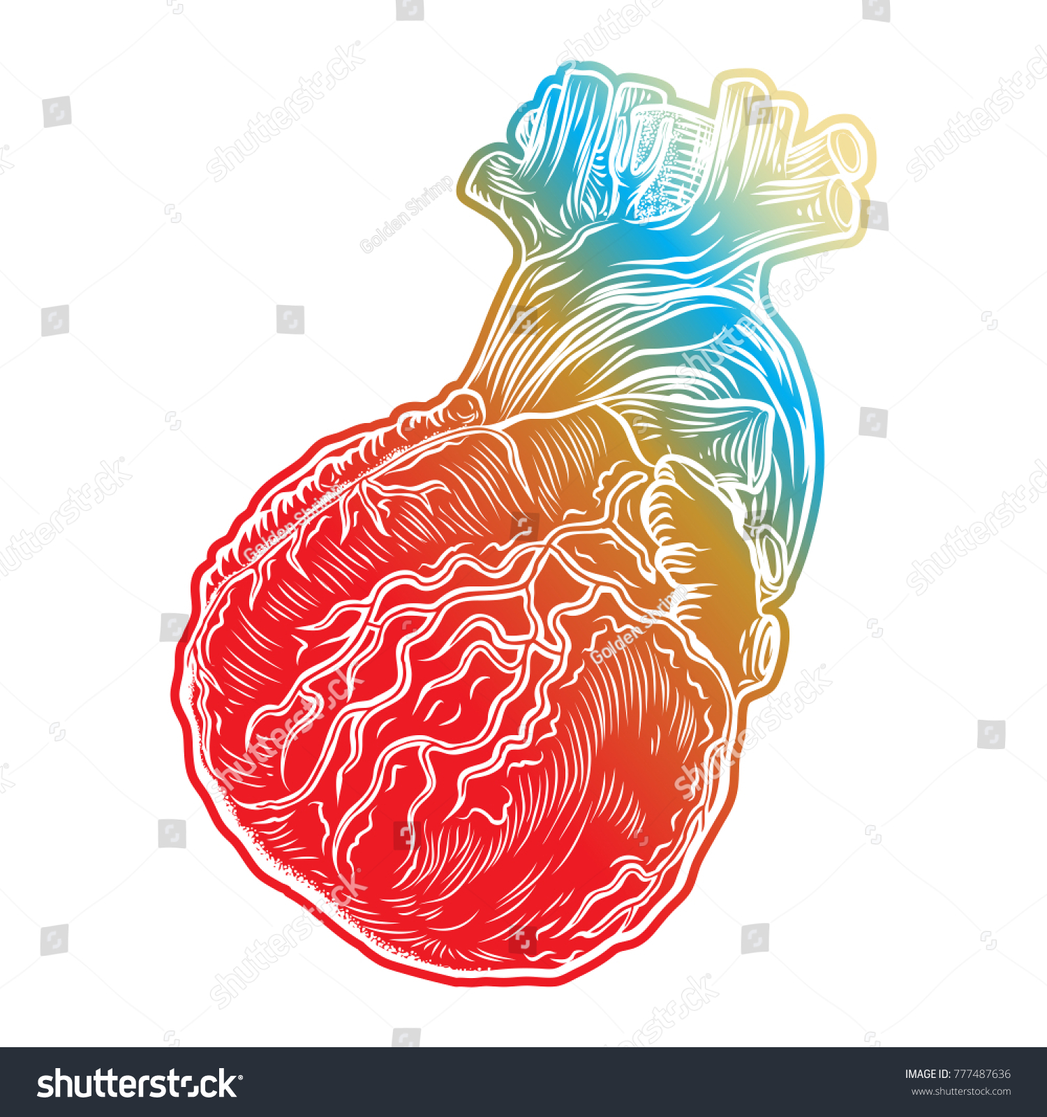 Sketch Human Heart Hand Drawn Anatomical Stock Vector 2018