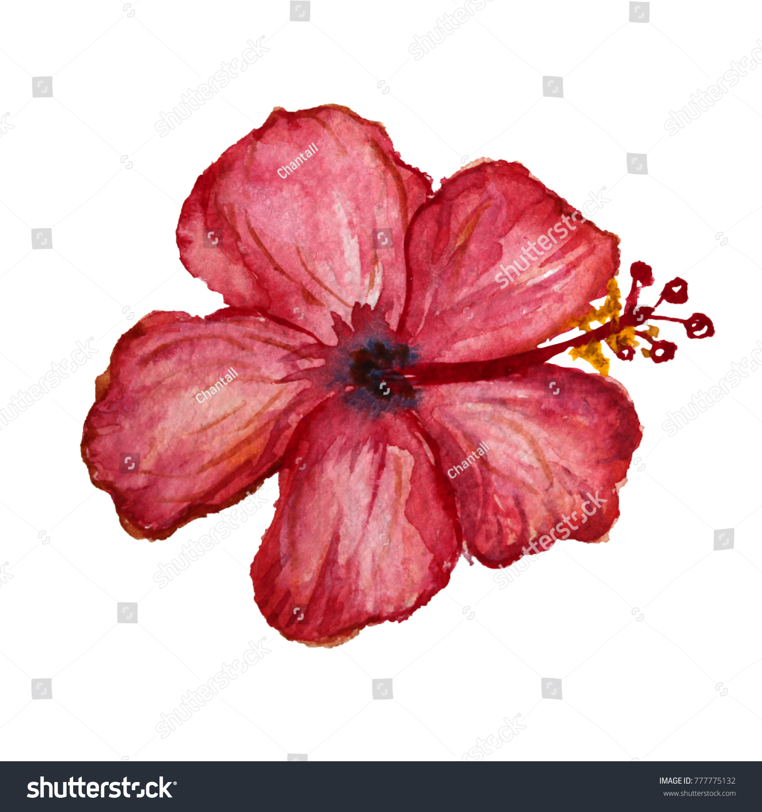Decorative Watercolor Hibiscus Flower Clipart Design Stock