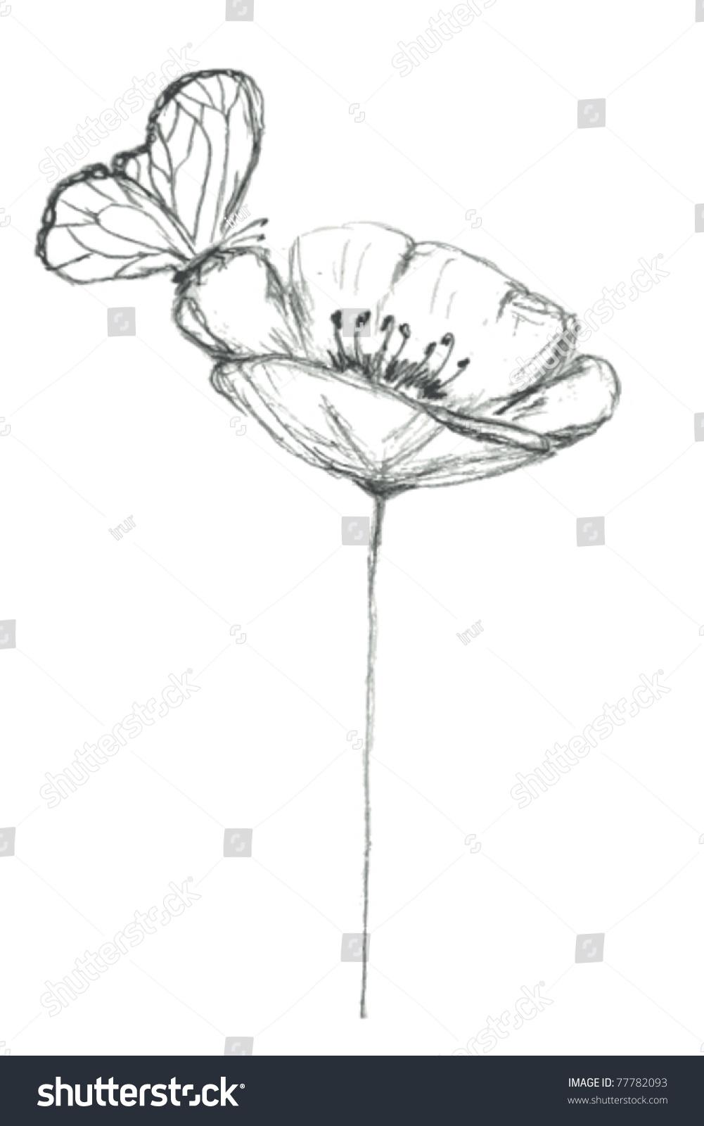 Stylized Sketch Poppy Flower Butterfly Vector Stock Vector Royalty