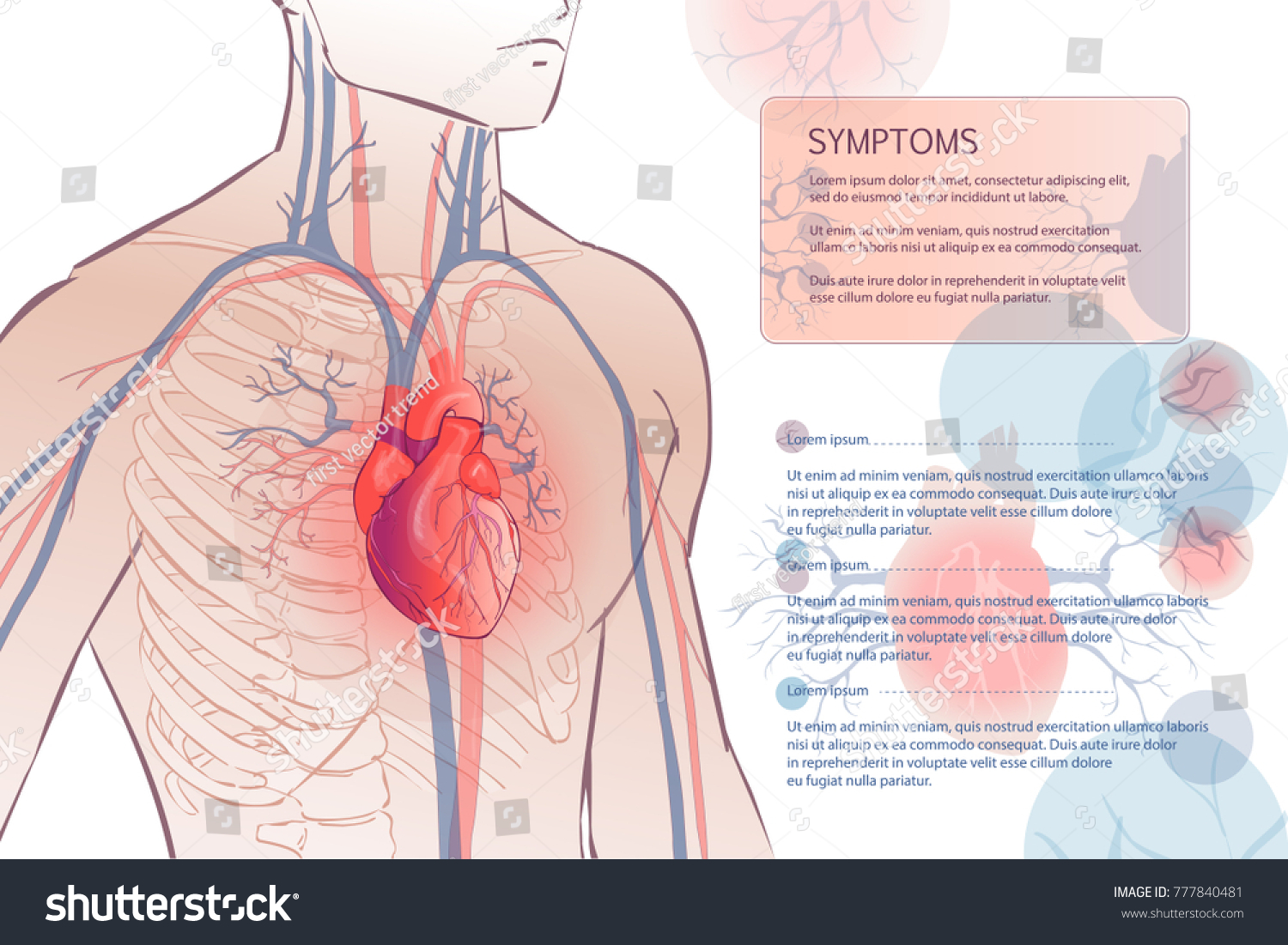 3 D Illustration Human Circulatory Vascular System Stock Vector HD ...
