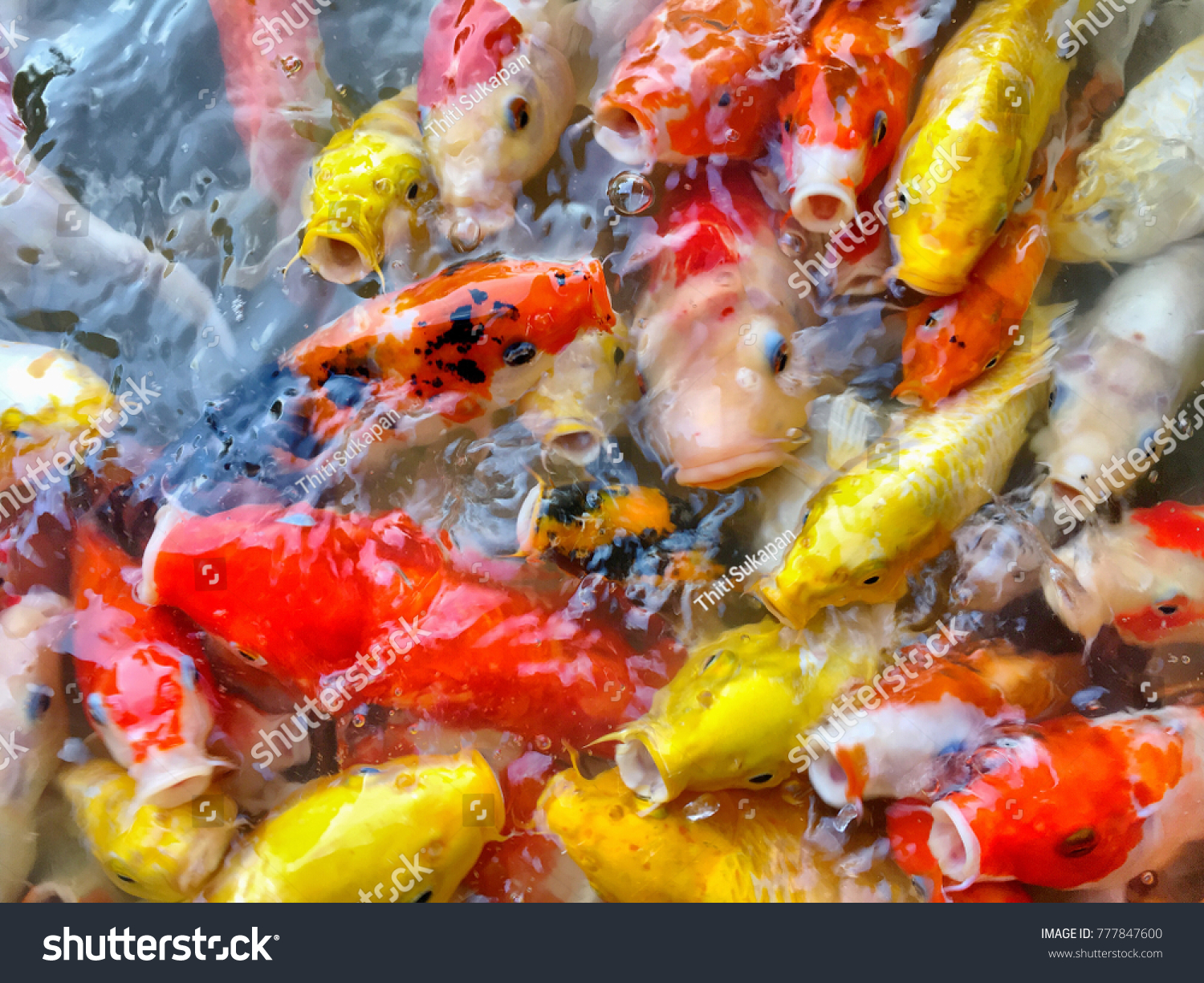 Attractive Koi Fish Colors Gift - Drawing Coloring - androidharga.info