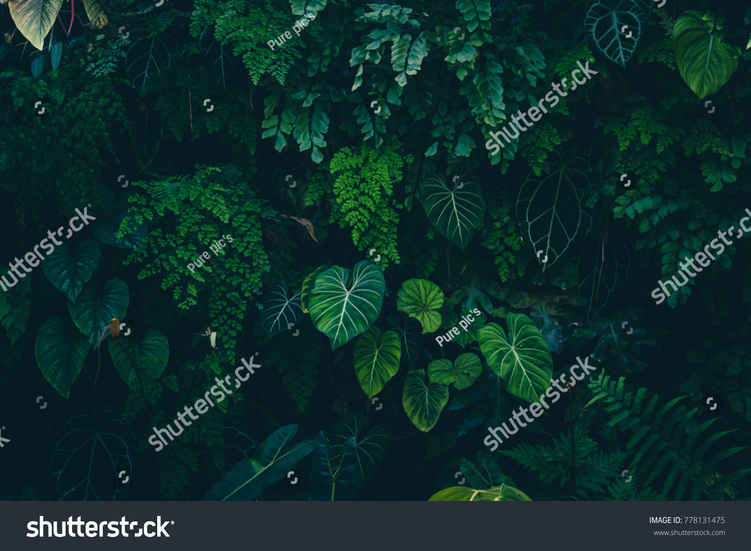 Tropical leaves texture,Abstract nature leaf green texture background.vintage dark tone,picture can used wallpaper desktop. #778131475