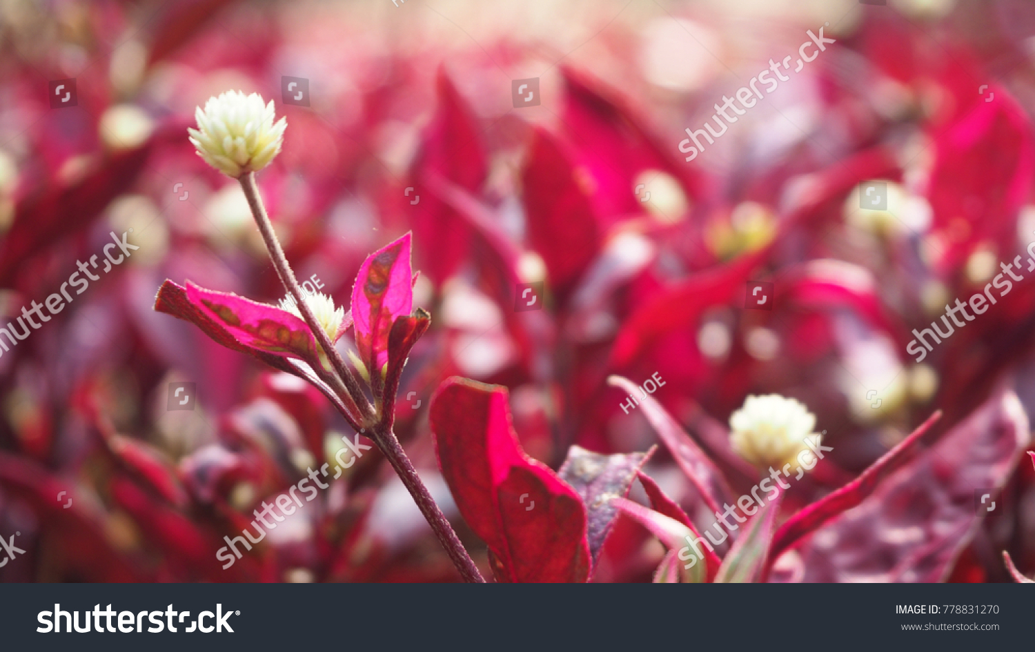 Red Leaves With White Flowers Ez Canvas