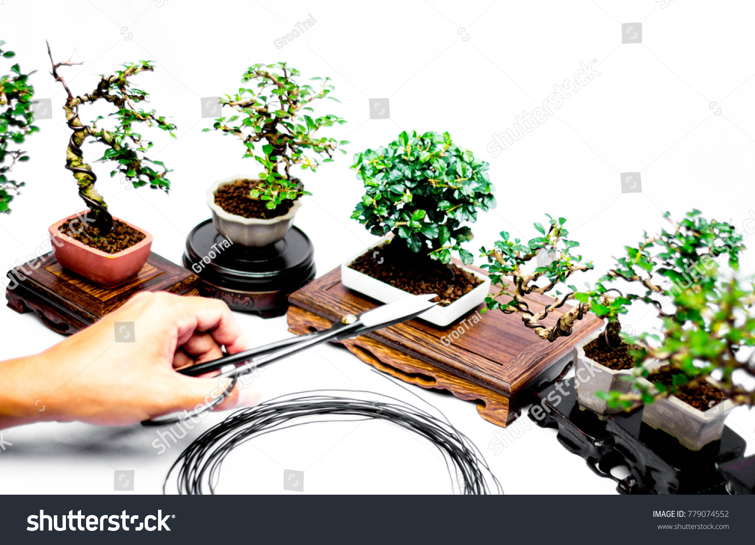 Making Bonsai Trees Handmade Accessories Wire Stock Photo Edit Now Tree Wiring Video Of And Scrissor Tools Stand