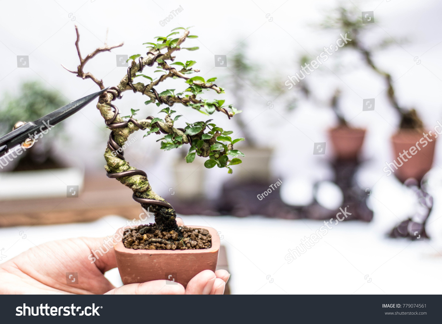 Making Bonsai Trees Handmade Accessories Wire Stock Photo Edit Now Wiring Chinese Elm Of And Scrissor Tools Stand