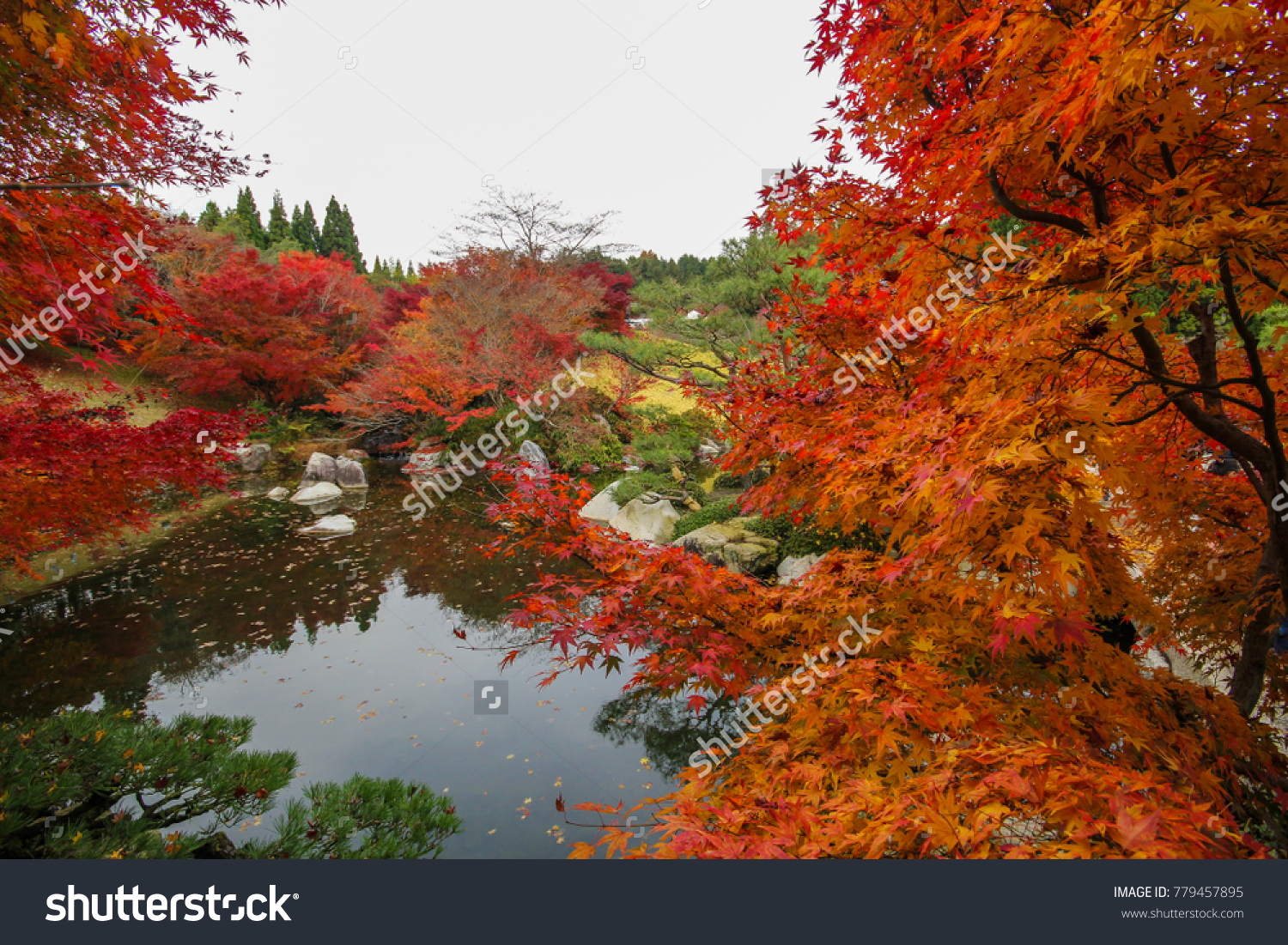 Sankeien Japanese Garden Park in autumn with maple leaves at ...