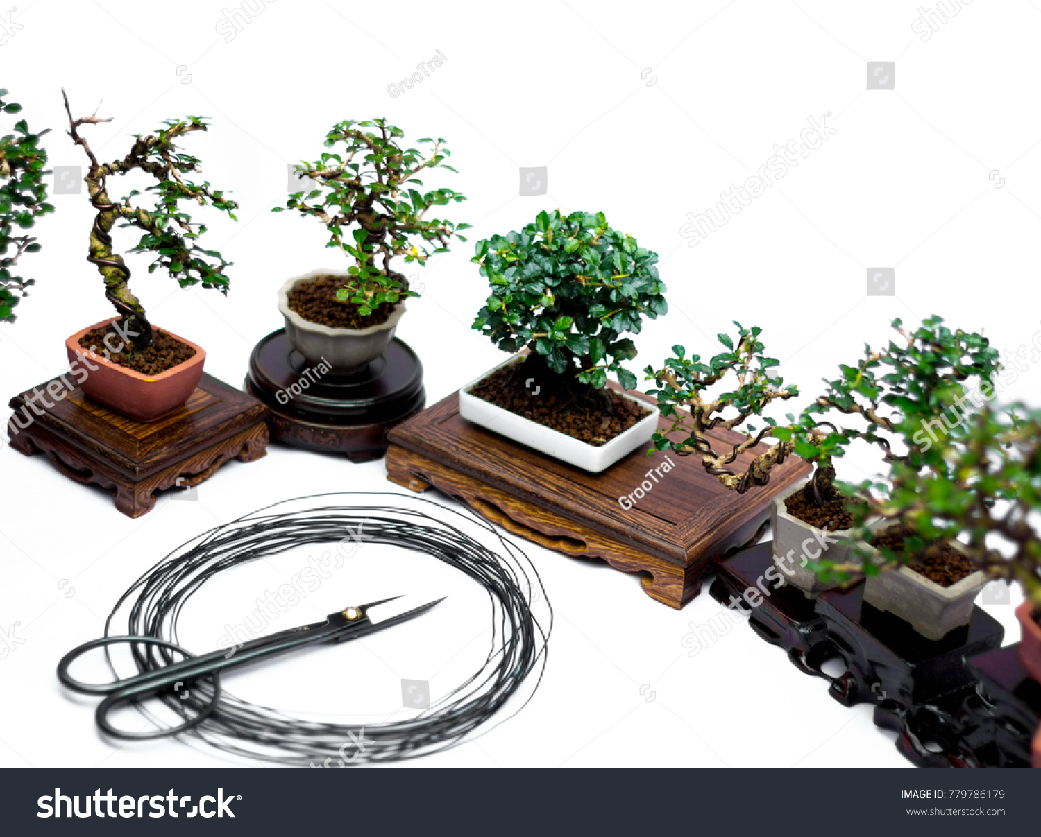 Scissor Bonsai Wire Equipment Stock Photo Edit Now Wiring Juniper Tree And Tools Trees Of Background