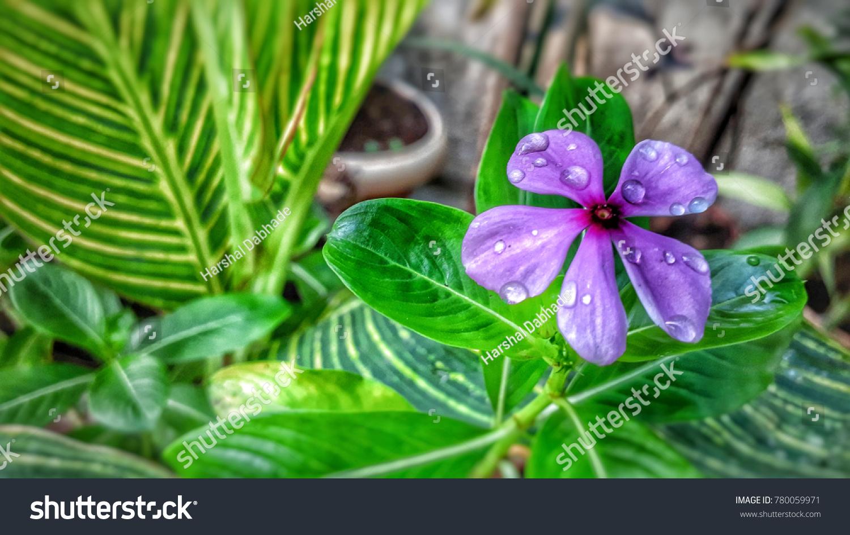 Beautyfull Flower Water Drops Stock Photo Edit Now 780059971