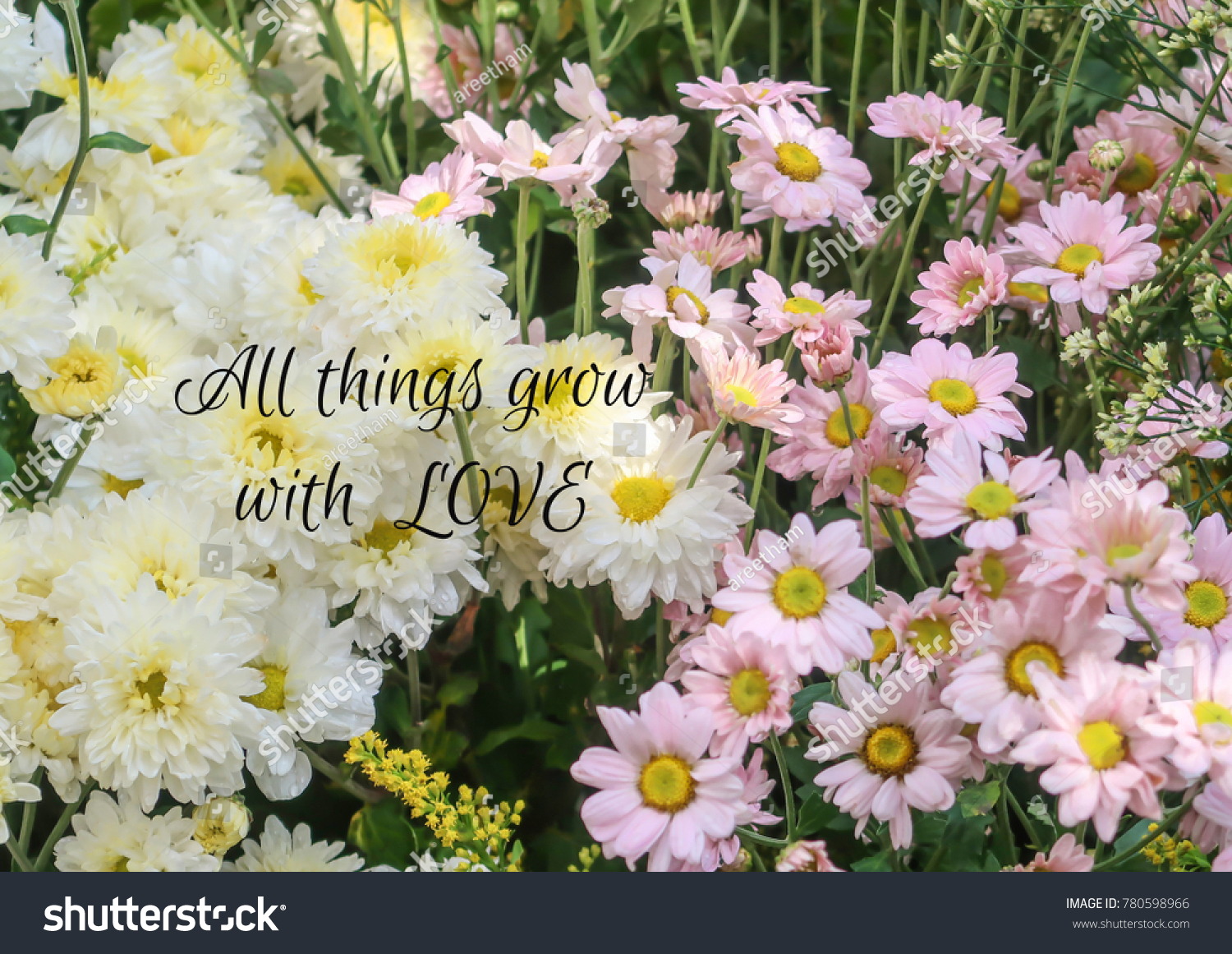 Inspirational Motivation Quote On Flower Background Stock Photo