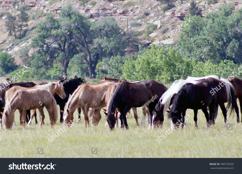Black Hills Wild Horse Sanctuary Hot Stock Photo Edit Now 780770539