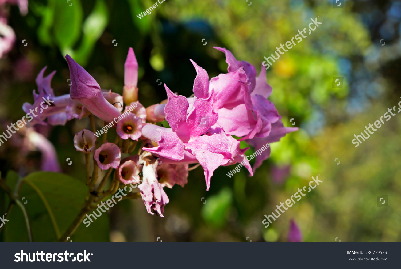Pink Flowers Climbing Plant Ez Canvas