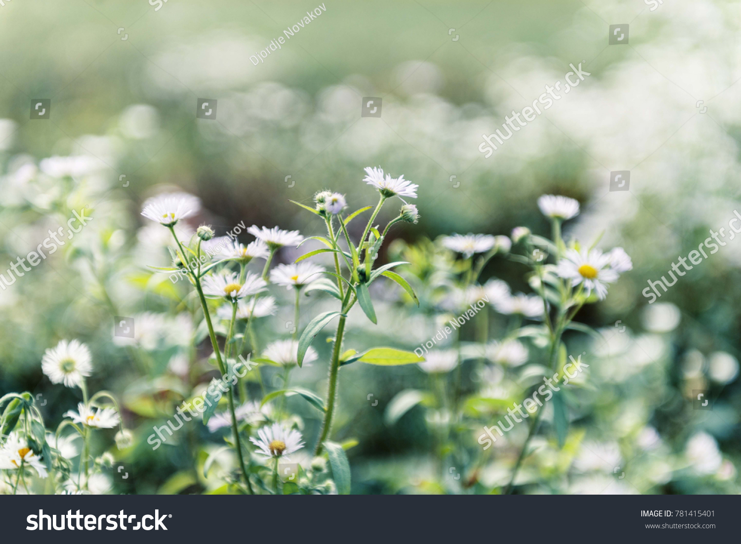 Nature Green Plants With White Flowers Close Up Ez Canvas