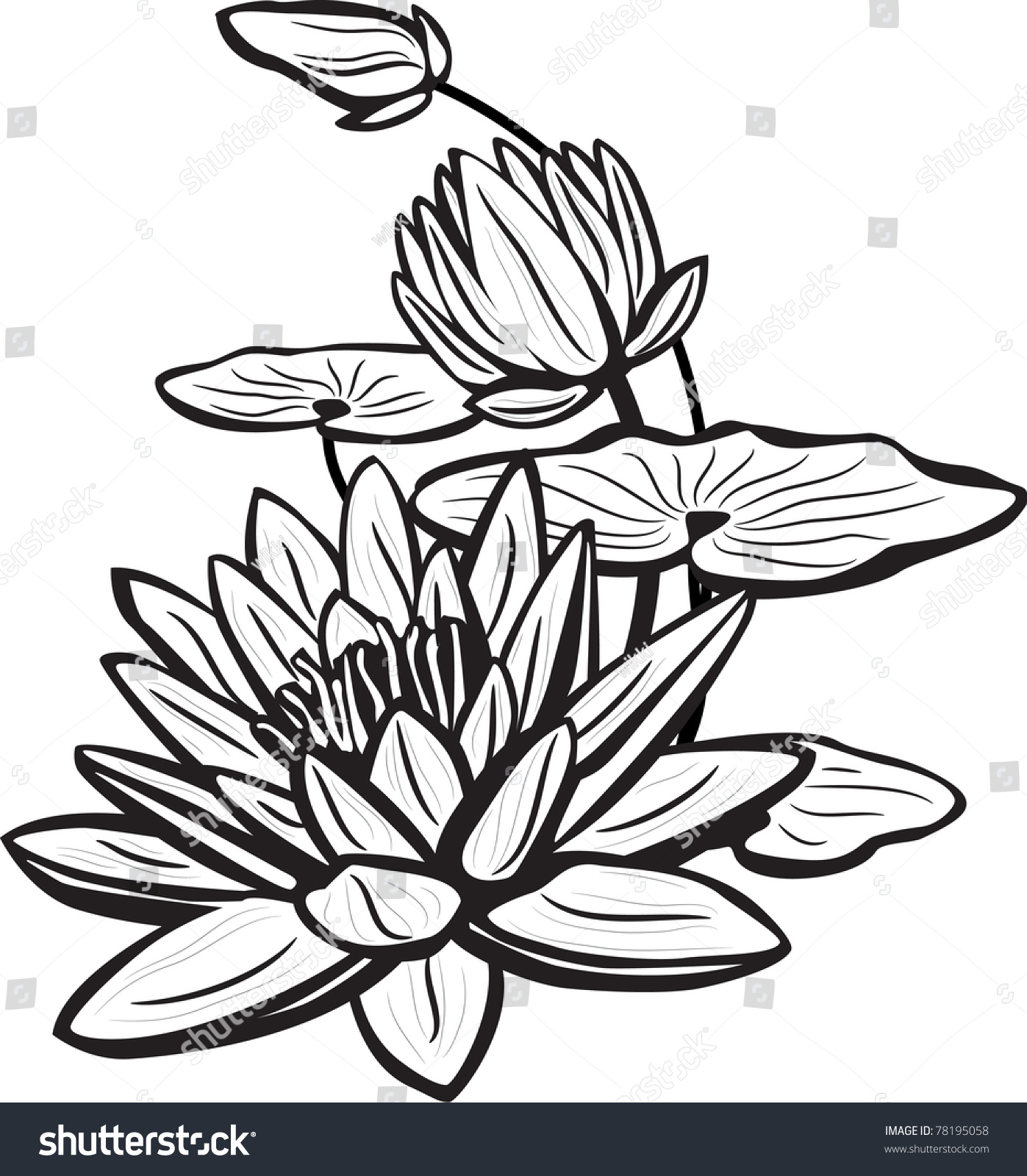 Sketch Lotus Flowers Stock Vector Shutterstock