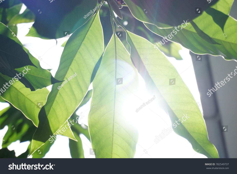 stock-photo-sunlight-canopy-through-leav
