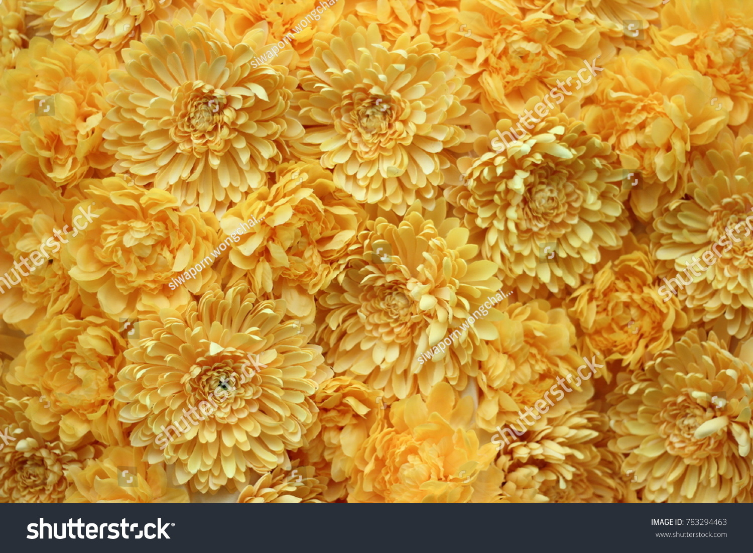 Yellow Flowers Aesthetic Background Stock Photo Edit Now 783294463