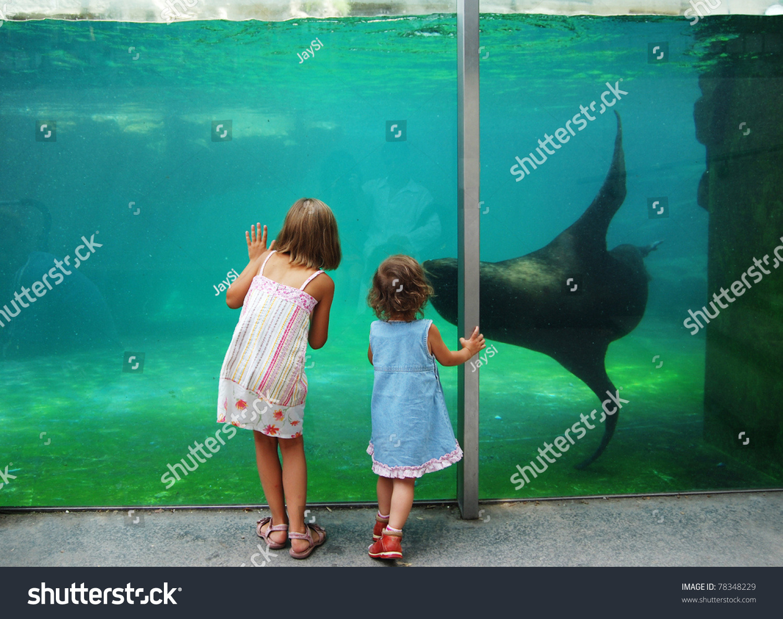 Children Near Zoo Aquarium Stock Photo 78348229 Shutterstock