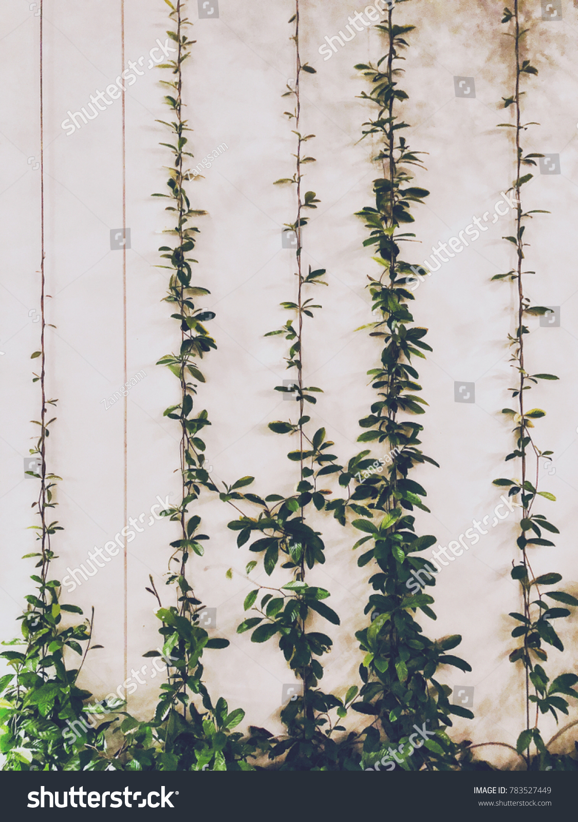 Plant Growing On Wire Rope Sling Stock Photo (Download Now ...