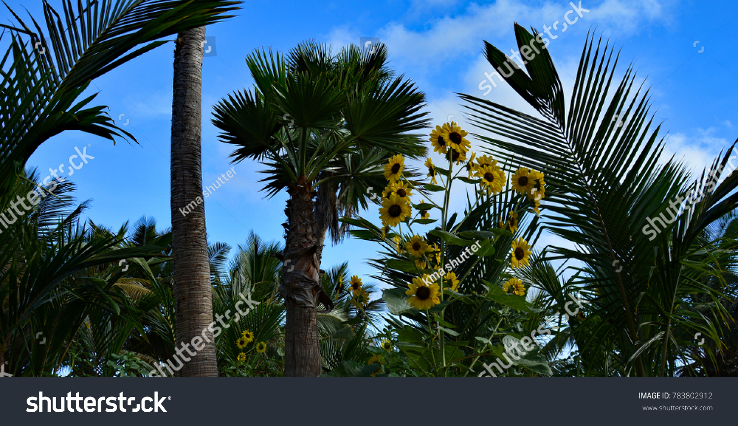 Beautiful Nature Yellow Flowers Palm Trees Stock Photo Edit Now