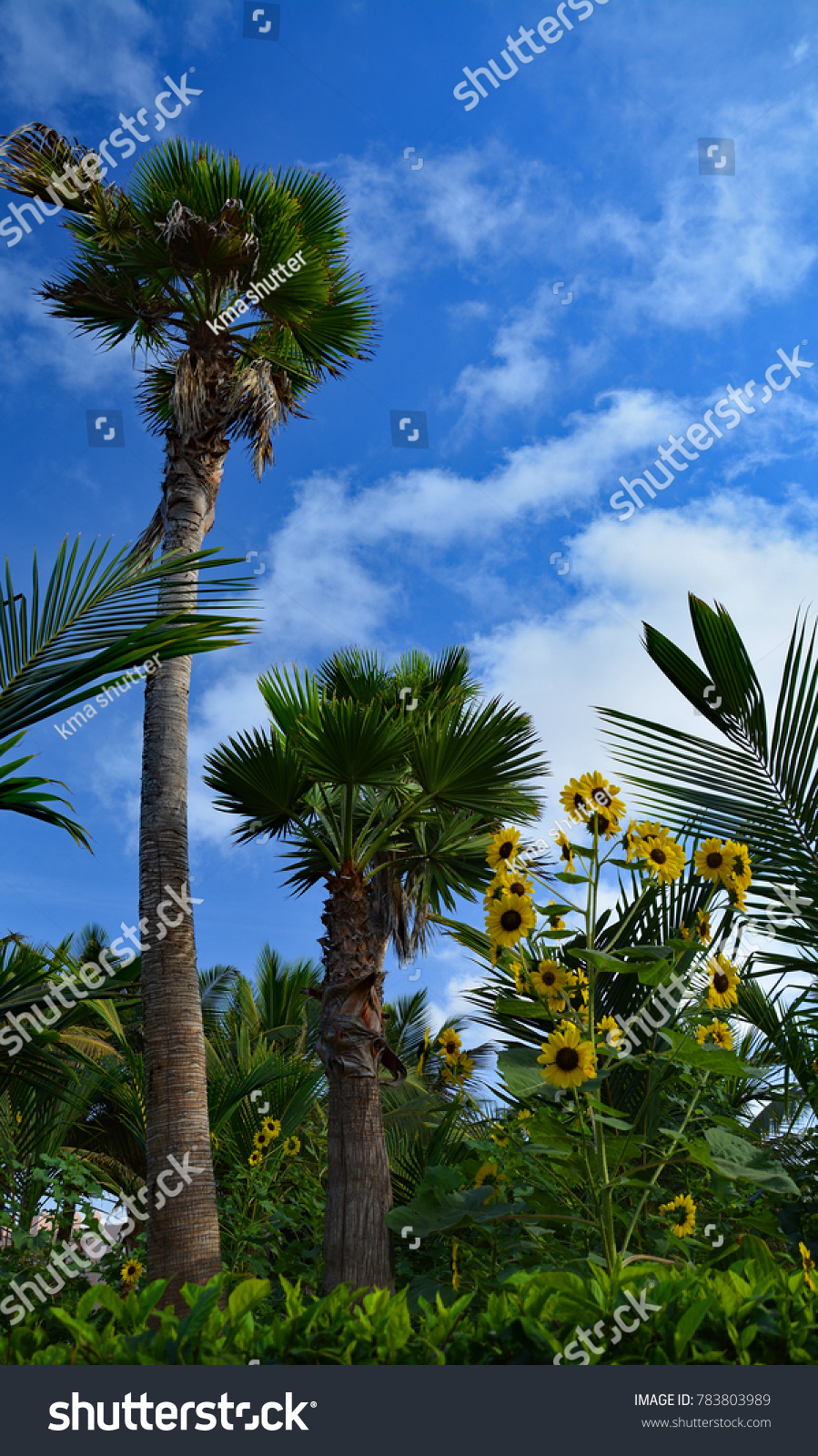 Beautiful Nature Yellow Flowers Palm Trees Stock Photo Download Now
