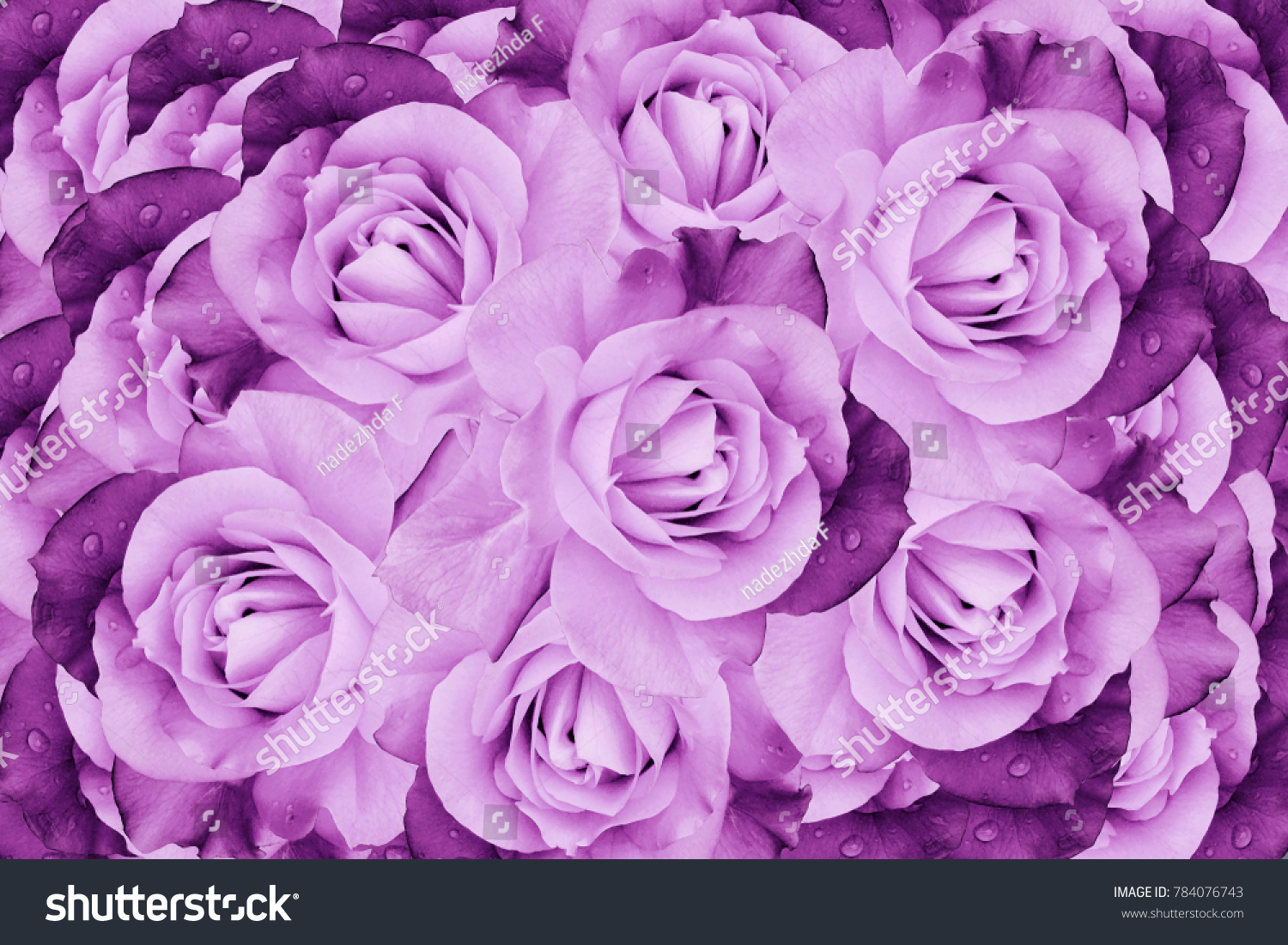 Floral pink violet beautiful background flower composition of roses id 784076743 izmirmasajfo